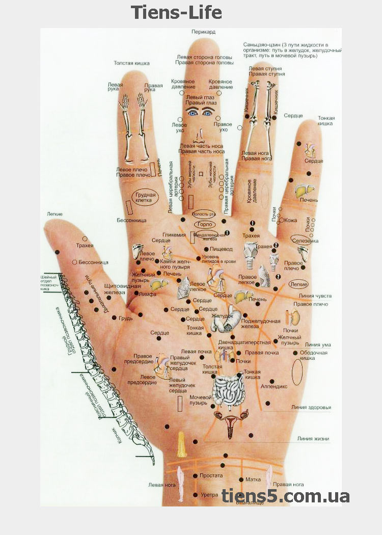 Акупунктурные точки на руке (ладонь) фото