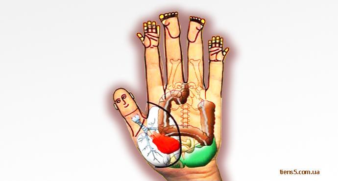 Схема акупунктурных точек на руках (ладони, пальцы) фото