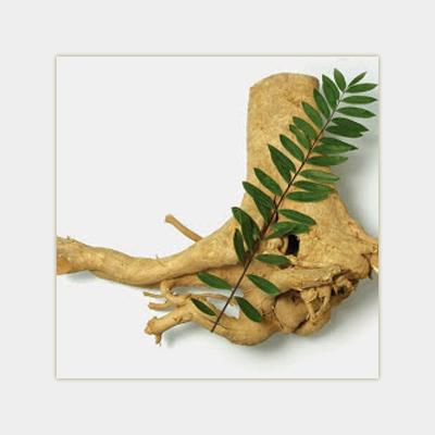 Eurycoma Longifolia Root. фото
