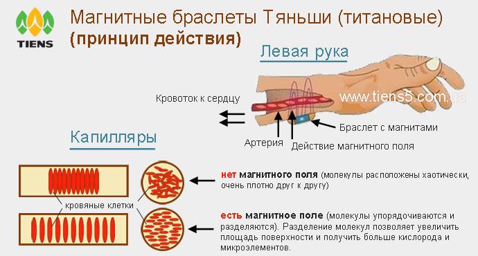 Принцип действия титановых магнитных браслетов Тяньши (Tiens) фото