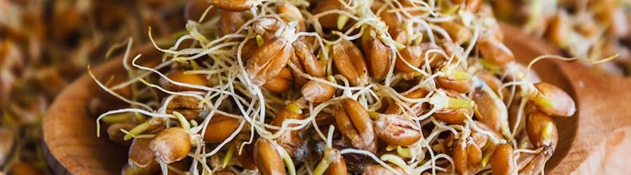 Масло зародышей пшеницы фото